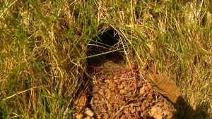 Small mammal burrow